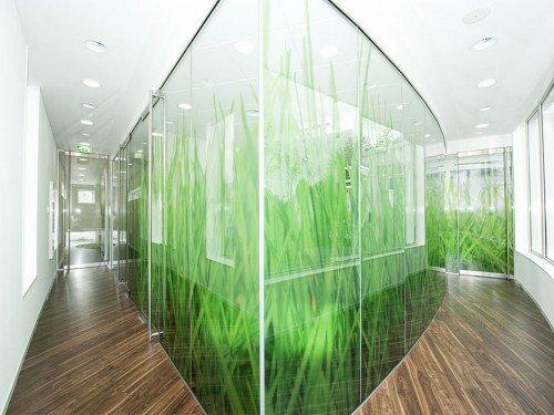 Sfeer bij tandarts met wanddecoraties en glasdecoraties door Iwaarden uitgevoerd als print op behang en print op glasfolie, window graphics, wallcovering